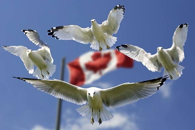 gulls-540791_640