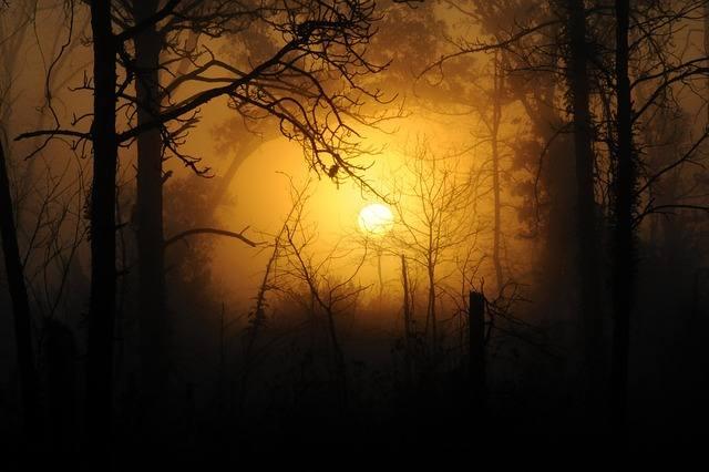 woods-183519_640