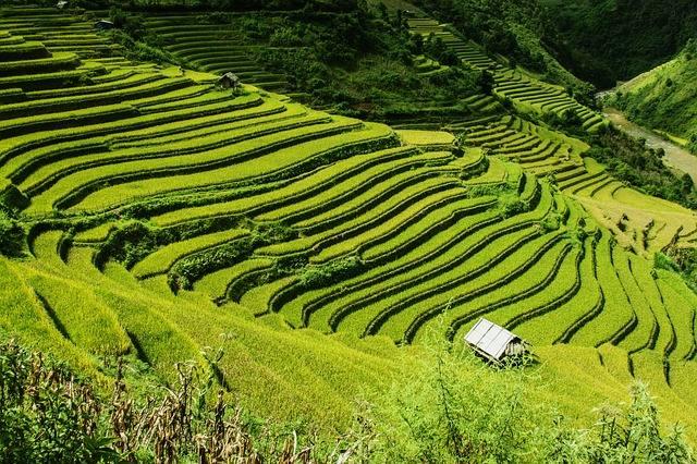 rice-terraces-276017_640