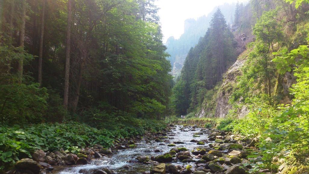 река в польских татрах долина хохоловска