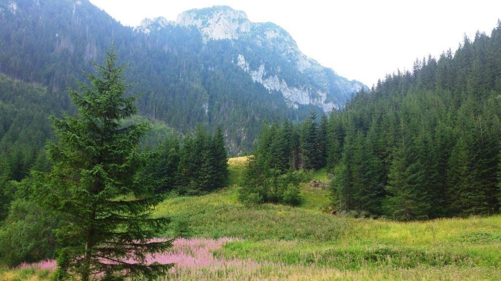 польские татры долина хохоловска летом