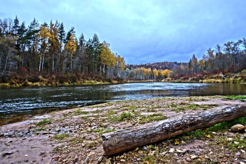 река Гауя осень