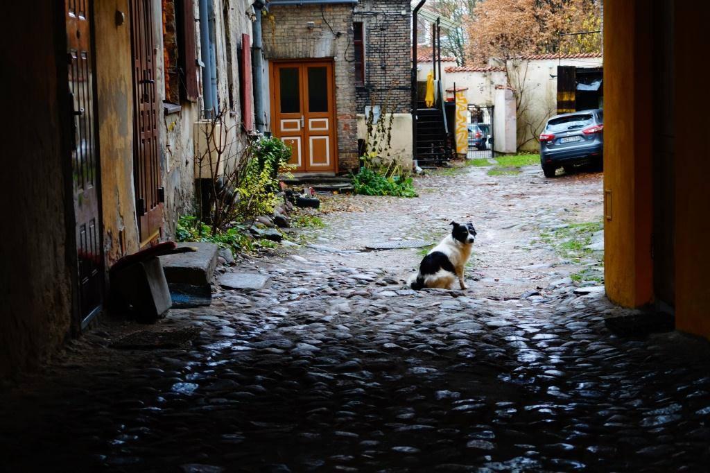 двор в ужуписе и собака