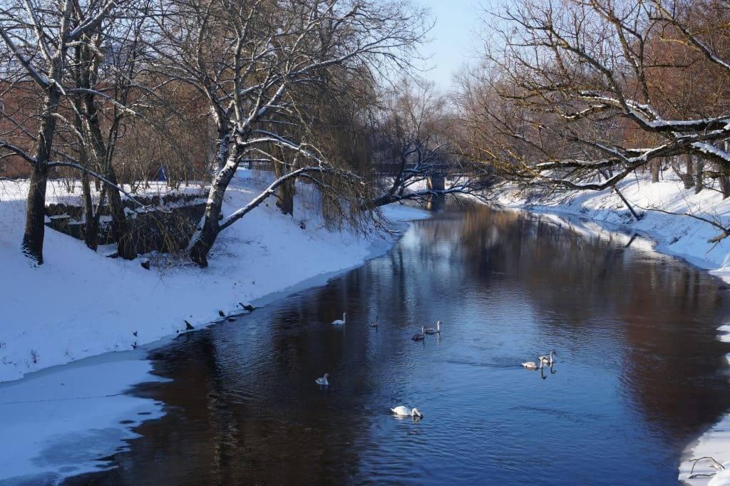 река и лебеди Муховец