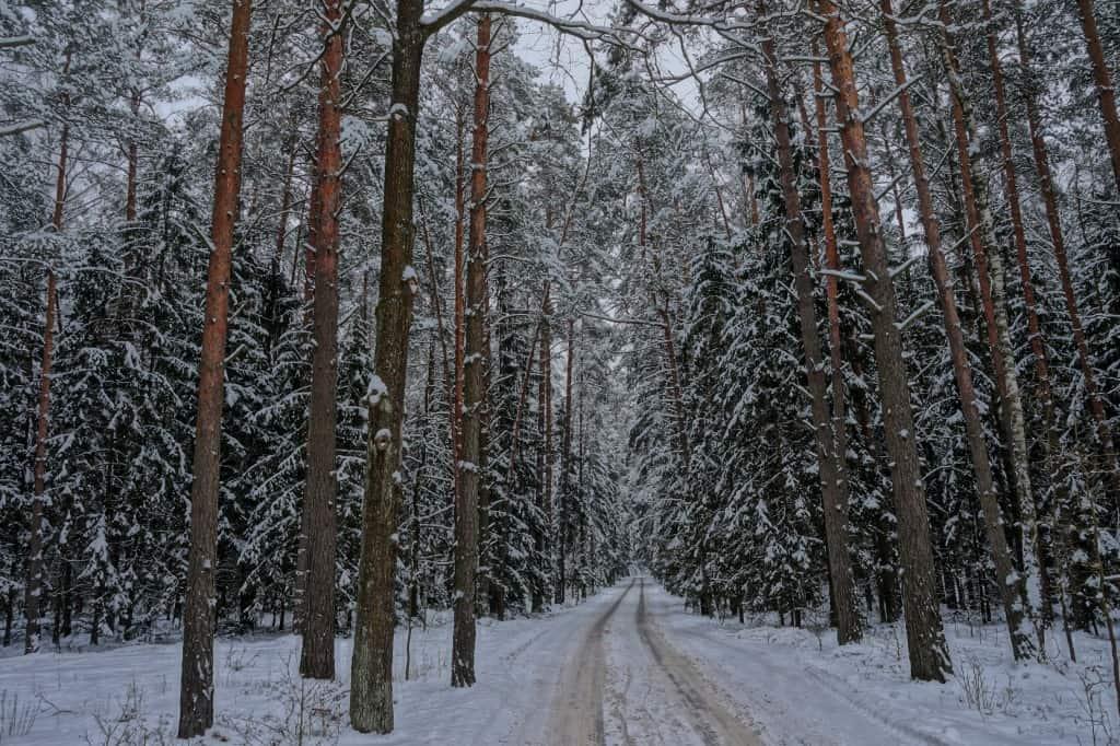 Беловежская пуща зимой