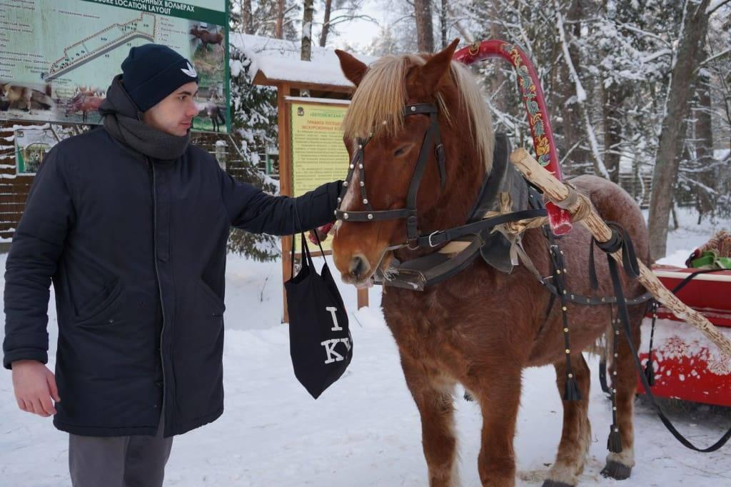 лошадь в Беловежской пуще