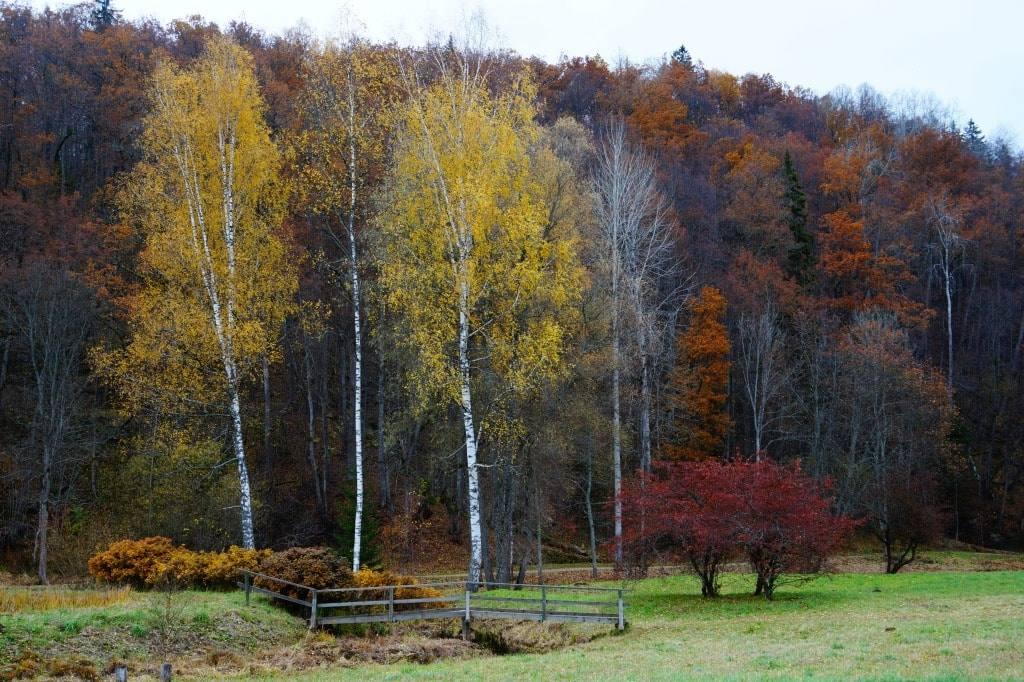 осень Сигулда