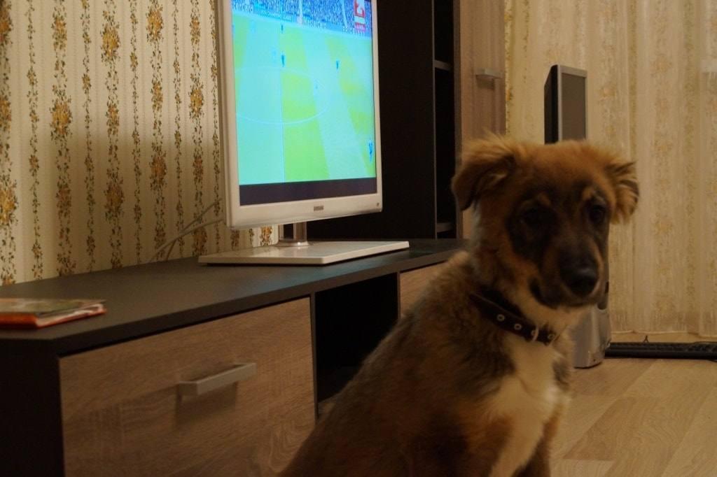 щенок смотрит ТВ