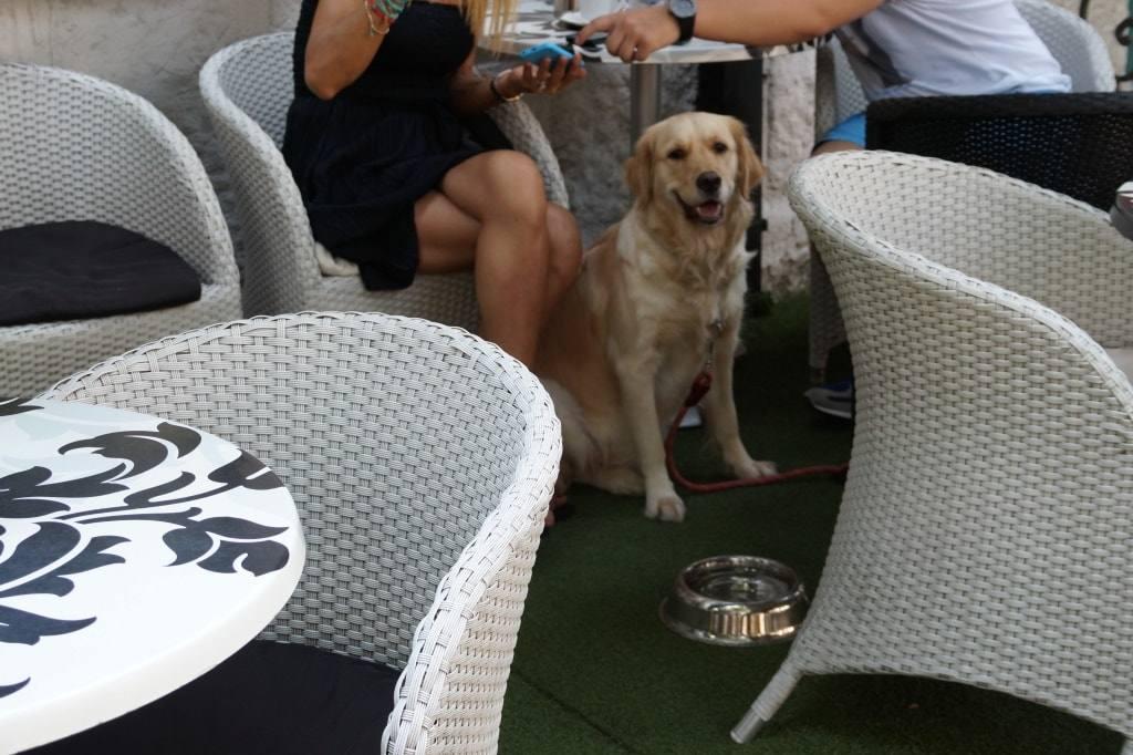 sobaka v kafe Serbia