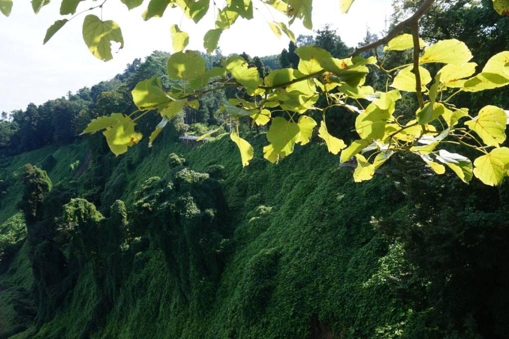зеленый мыс
