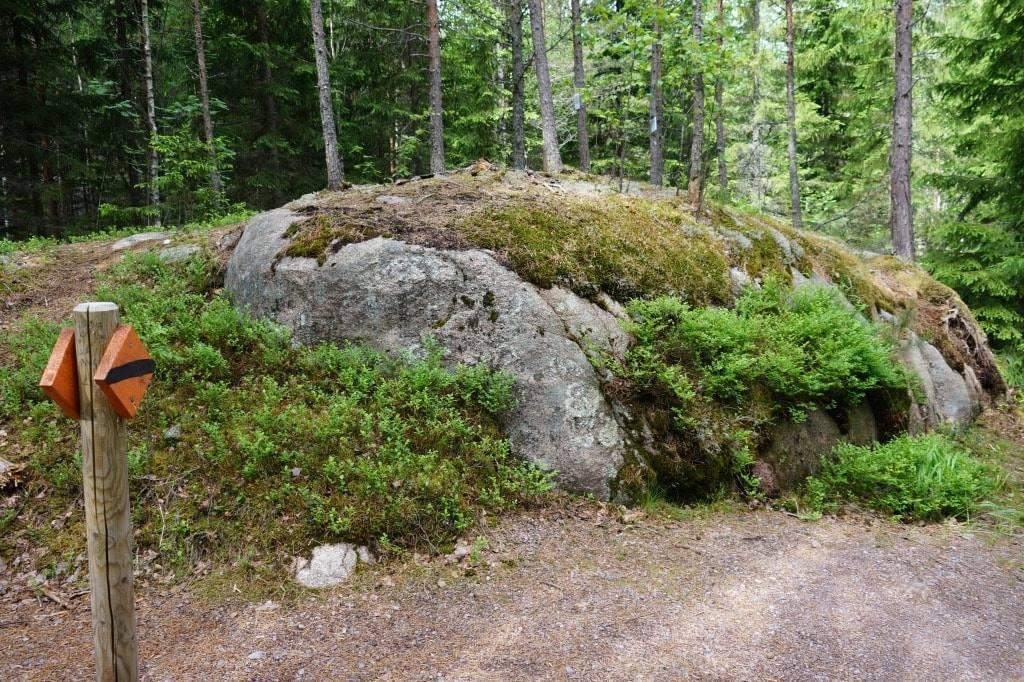 Место под соснами: большой рассказ про национальный парк Нууксио