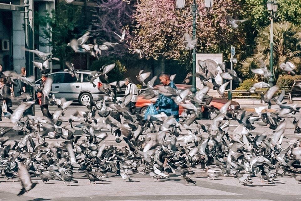 golubi-kotzia