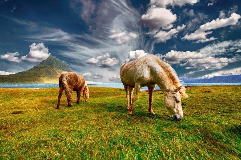 islandija-kuda-poehat
