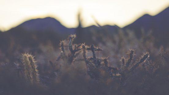 Хардин Канарио: путь длиною в 100 фотографий