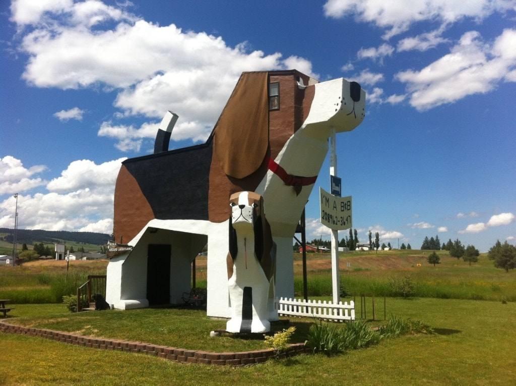 необычный дом собака