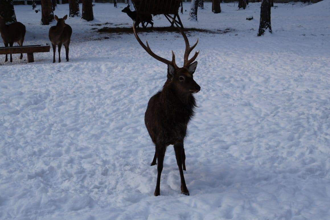 Национальный парк Беловежская пуща: цены, фото и много полезной информации