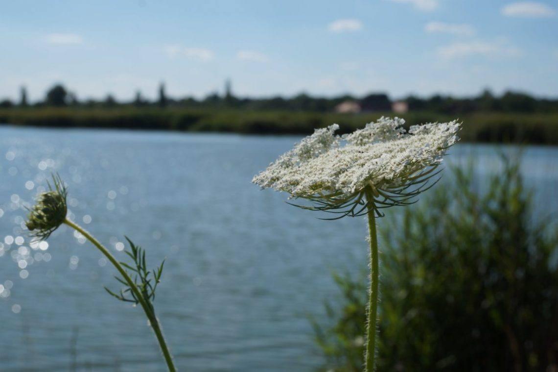 Serbia-Palic-Lake