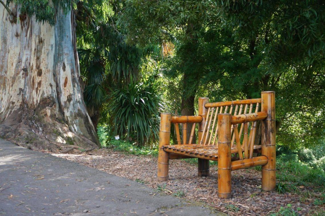Грёзы Грузии: Ботанический сад Батуми и все, что о нем стоит знать