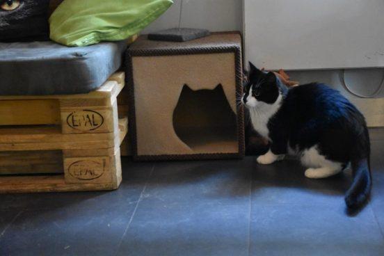 Кафе с котами в Гданьске: адрес, история и личные впечатления.