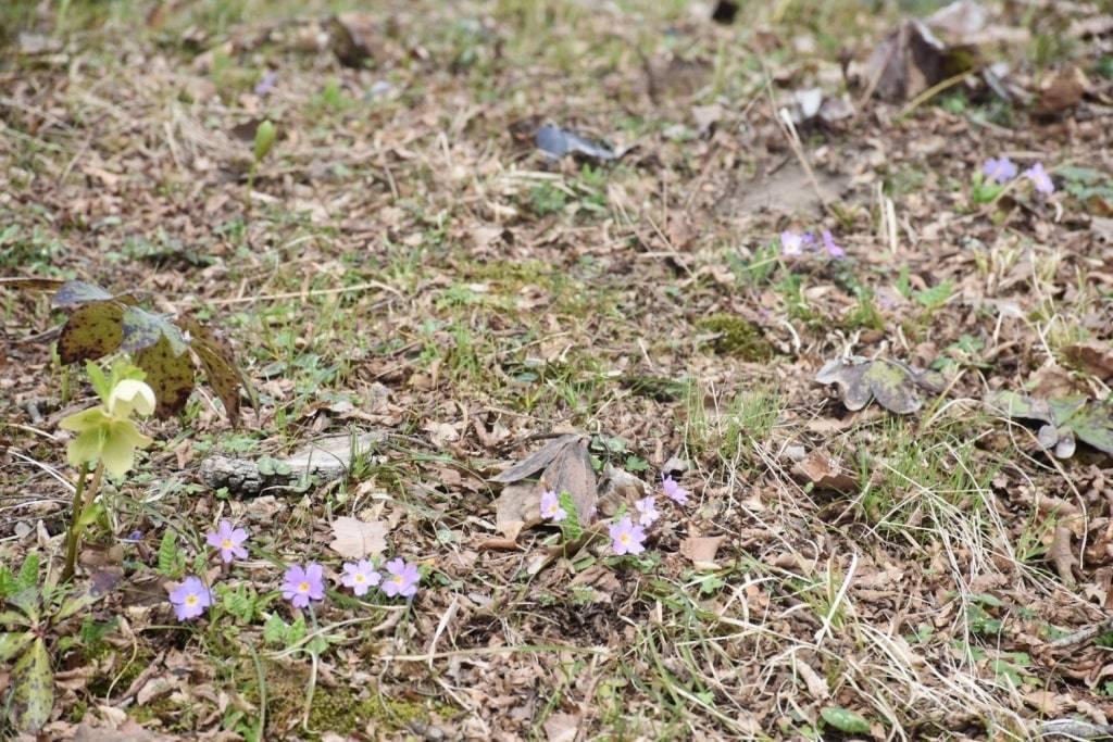 cvety-v-gorah