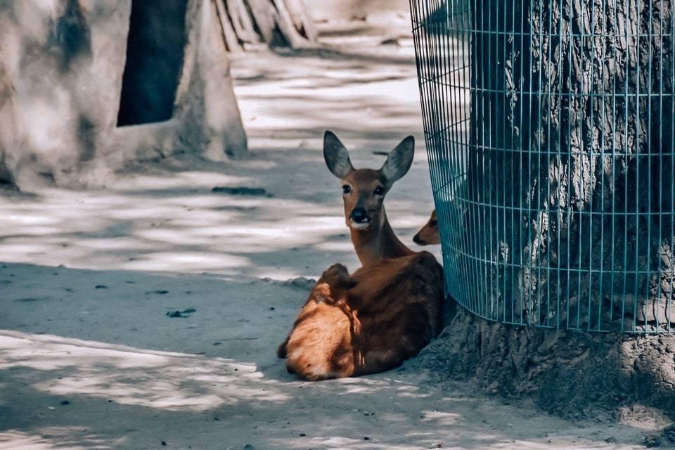 kak-dobratsja-v-zoopark-pekina