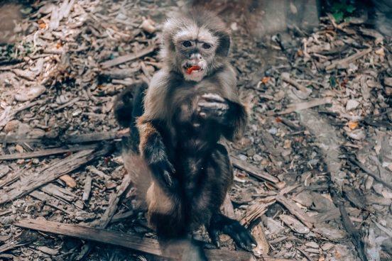 obezjana-v-zooparke